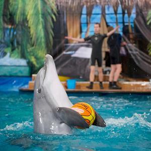 Дельфинарии, океанариумы Бора