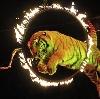 Цирки в Боре