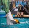 Дельфинарии, океанариумы в Боре