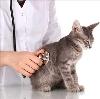 Ветеринарные клиники в Боре